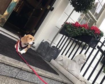 Piet – ein Beagle in London