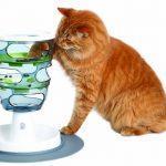 """Die Katze rennt wie verrückt durch die Wohnung – Was steckt hinter den """"5 Minuten"""" der Katze?"""