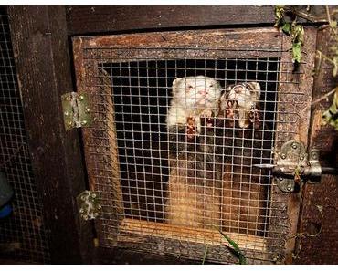 Pelz – Die Wahrheit über die Pelzindustrie und ihre Tiere