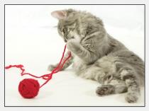 Auszug aus dem Tagebuch einer Katze