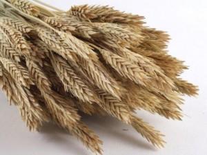 """""""Das Leben"""" zu Thema Getreidebau"""