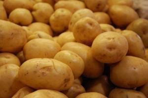 """""""Das Leben"""" zum Thema Kartoffelbau"""