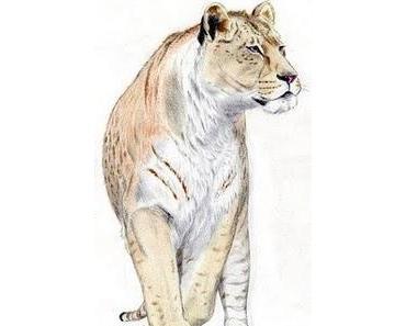 Der größte Löwe jagte in Amerika