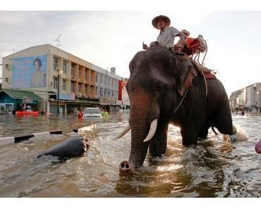 Flut in Thailand: Beeindruckende Fotogalerie und ein Blog mit viel Information