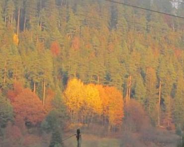 Goldener Herbst…
