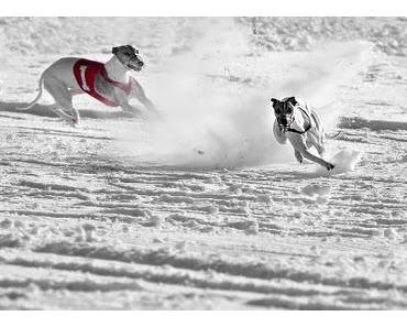 NordCup am 7.Jänner 2012 - Schneecoursing in Tschechien