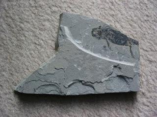 Fossilien: Kleine Saurier zu kleinen Preisen