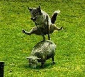 Der Wolf, der böse Wolf !  (al Lupo, al lupo)