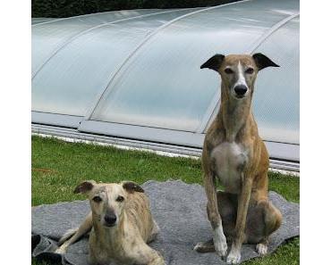 Rangordnungsprobleme und Hundeausstellung in Graz