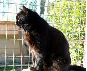 Bringen schwarze Katzen Unglück?