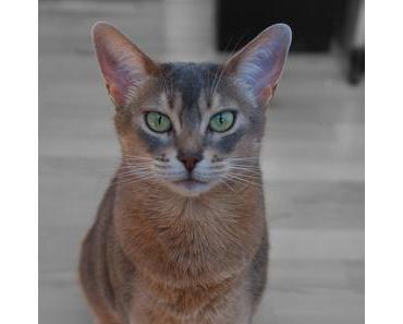 Katzenhoroskop: Die Widder-Katze – 21.03. – 20.04.