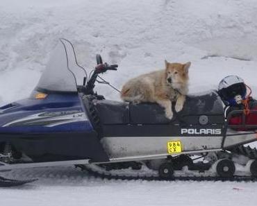 Husky-Safari in Finnland: Es geht lo-o-s!
