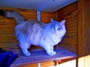 Die schöne Katzendame Ysis sucht ein schattiges Plätzchen