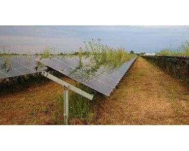 Transfergesellschaft rettet Sonnenenergie