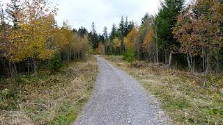 Wann ist ein Wald ein Wald?