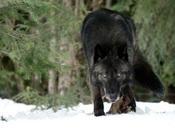Überleben Wildnis Alaskas: 'The Grey'