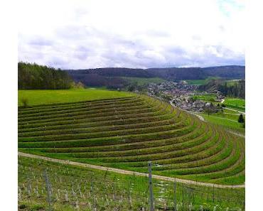 """Mit """"Vinum"""" auf dem Weinwanderweg"""