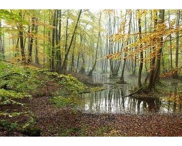 Nordosten bei Waldschutz ganz vorne