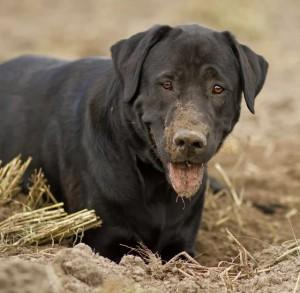 Hundefutter Test – sind die Testberichte ihr Geld wert?