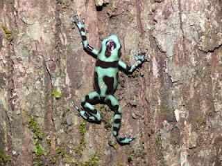 Reisetagebuch Costa Rica Tag 6