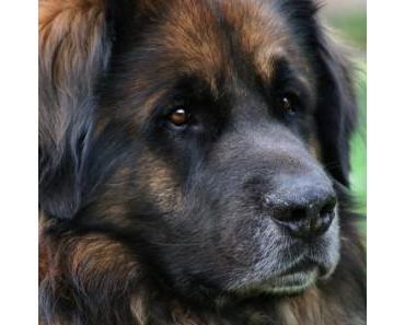 Hundefutter von Wunschfutter.de