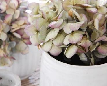Blumen Mix - flower mix