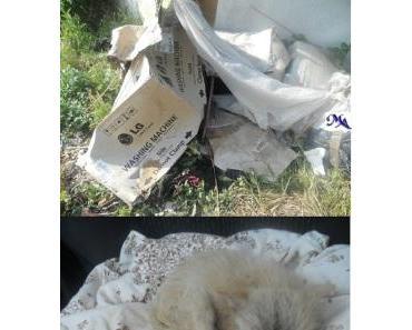 Hundewelpen im  Müllhaufen !!! STOP & Helft mit  ! Danke sagt euch Michele Angelo