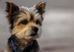 Futter für den Hund – Vom Allesfresser bis zum Gourmet