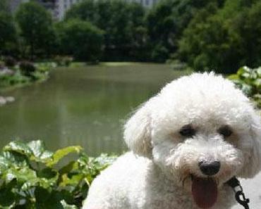 Mit dem Hund durch den Central Park