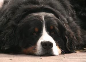 Hundefutter im Vor- und Nachteile Vergleich