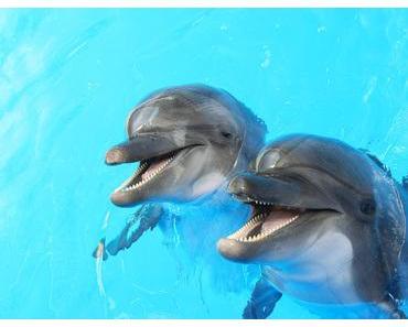 Mit Delphinen auf einer Wellenlänge: Sonophorese bei niedriger Frequenz