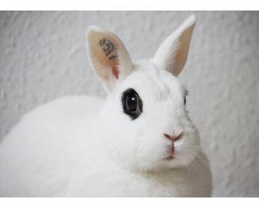Ab welchen Alter trinken Kaninchen?