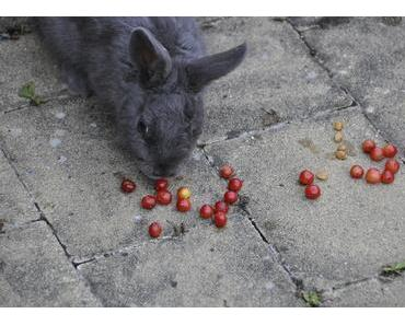 Wie lange ist das Gedächtnis von Kaninchen?