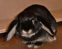 Kann Kaninchen nicht auf den Arm nehmen