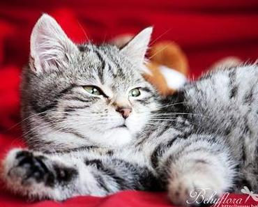 Barney, the Cat