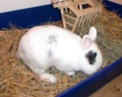 Wo soll ich Kaninchen kaufen?