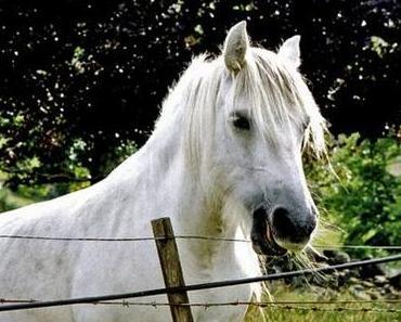 Pferdefleisch [Schnappwort]