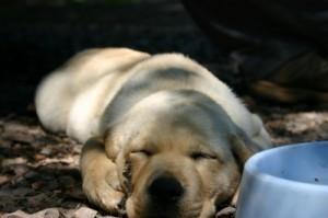 Hundefutter Test – prüfen Sie die Qualität