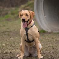Ausflug mit Dog-Shooting