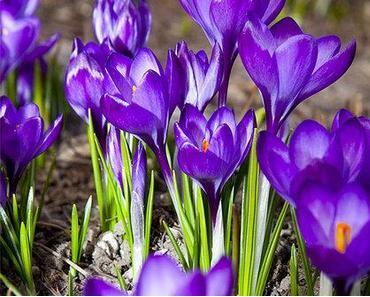 An den Frühling • Ein Gedicht von Friedrich Schiller