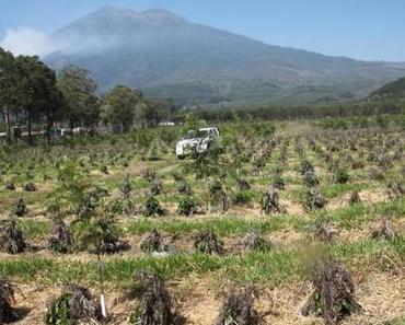 Teil 4: Kaffee-Exkursion nach Guatemala
