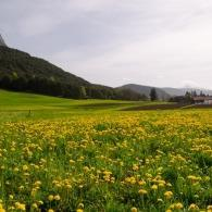 Alplhütte – Mieminger Plateau mit Hund