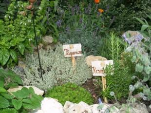 Eigene Kräuter im Garten