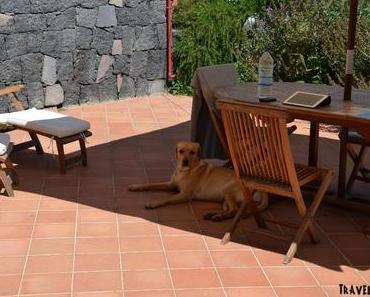 Sonnenbrand, Hitzschlag und Sonnenstich bei Hunden