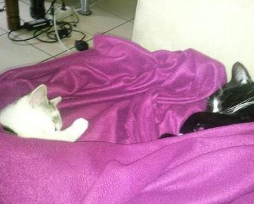 Warum zwei Katzen besser sind als eine