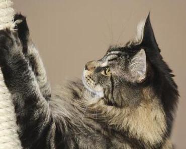 Was kann man gegen unerwünschtes Kratzen von Katzen machen?