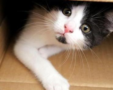 Katzenmama-Post: Neues von Rosalie
