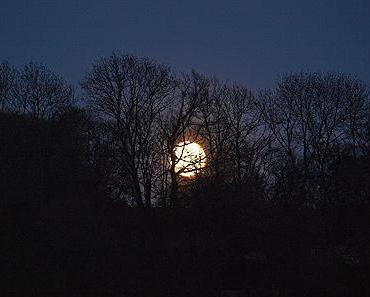 Mondnacht im Mai …