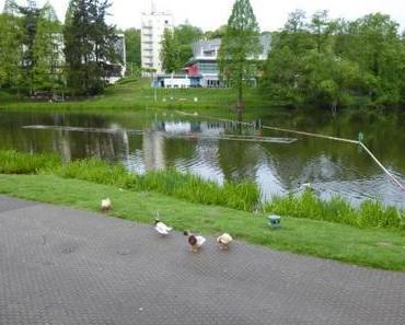 Spaziergang im Regen – Deutsch-Französischer Garten Saarbrücken