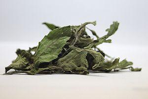 Süße Medizin – die Heilkraft der Stevia rebaudiana Bertoni – Teil 3